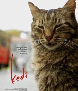 'Kedi' offers unique view on ancient streets of Istanbul
